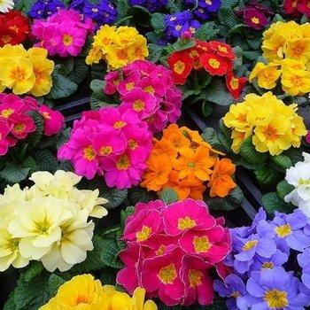 Best Season Flowers  - Voorjaar