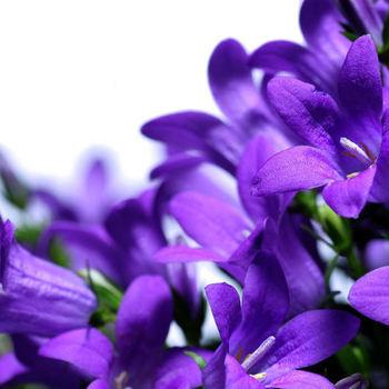 Best Season Flowers  - Zomer
