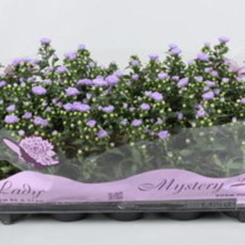 Best Season Flowers  - Herfst
