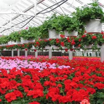 Best Season Flowers  - Winter